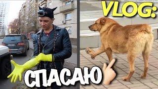 "VLOG: ""СПАСАЮ"" Е БАНУЮ СОБАКУ/ Андрей Мартыненко"