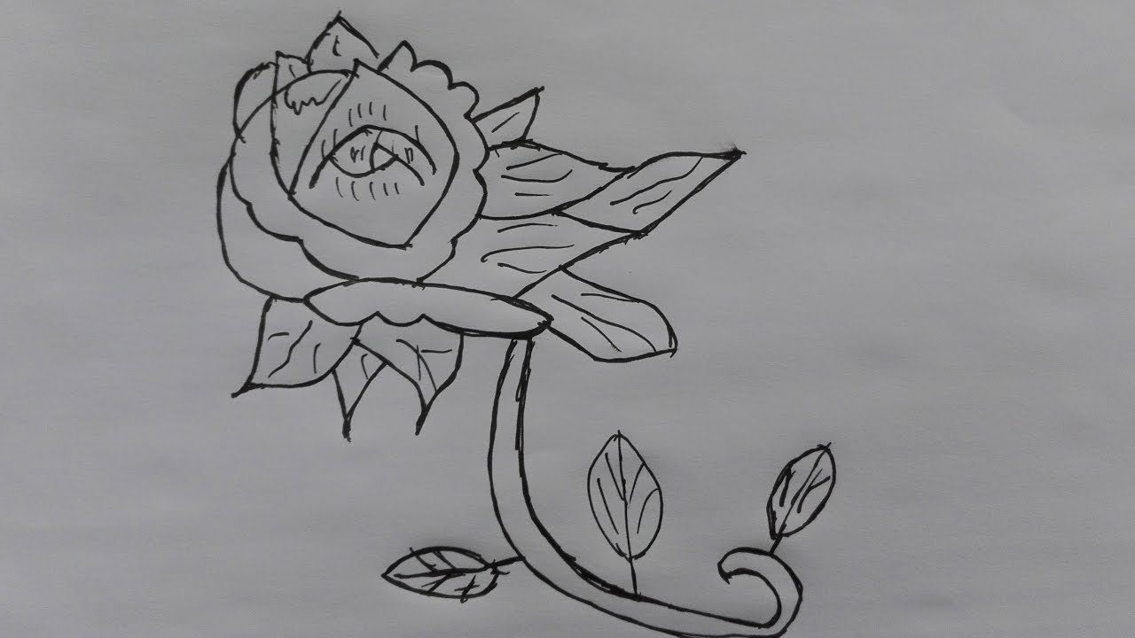 How to draw a pretty flower draw a realistic flower simple flower how to draw a pretty flower draw a realistic flower simple flower drawings in black and white mightylinksfo
