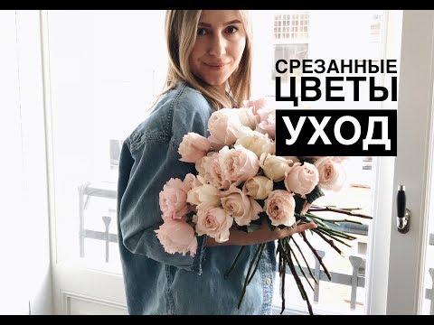 УХОД ЗА СРЕЗАННЫМИ ЦВЕТАМИ/на примере розы Девида Остин/Кейра