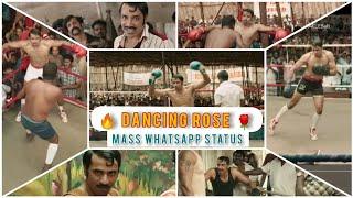 DANCING ROSE WHATSAPP STATUS  SARPATTA PARAMBARAI  DANCING ROSE SARPATTAmass status tamil