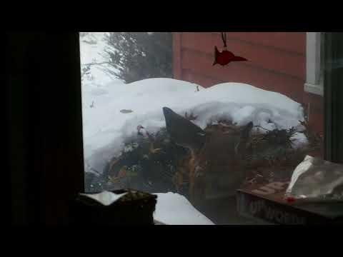 Deer Seeking Shelter in Ohio [2018 Blizzard]