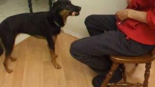 Secrets Of Training A Dog To Fetch Hot Dog (retrieve)