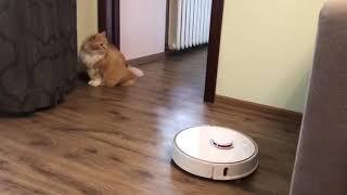 Робот пылесос коты в шоке! ¡