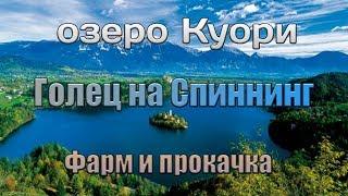 Русская Рыбалка 4 Куори ФАРМ! Голец на железки!