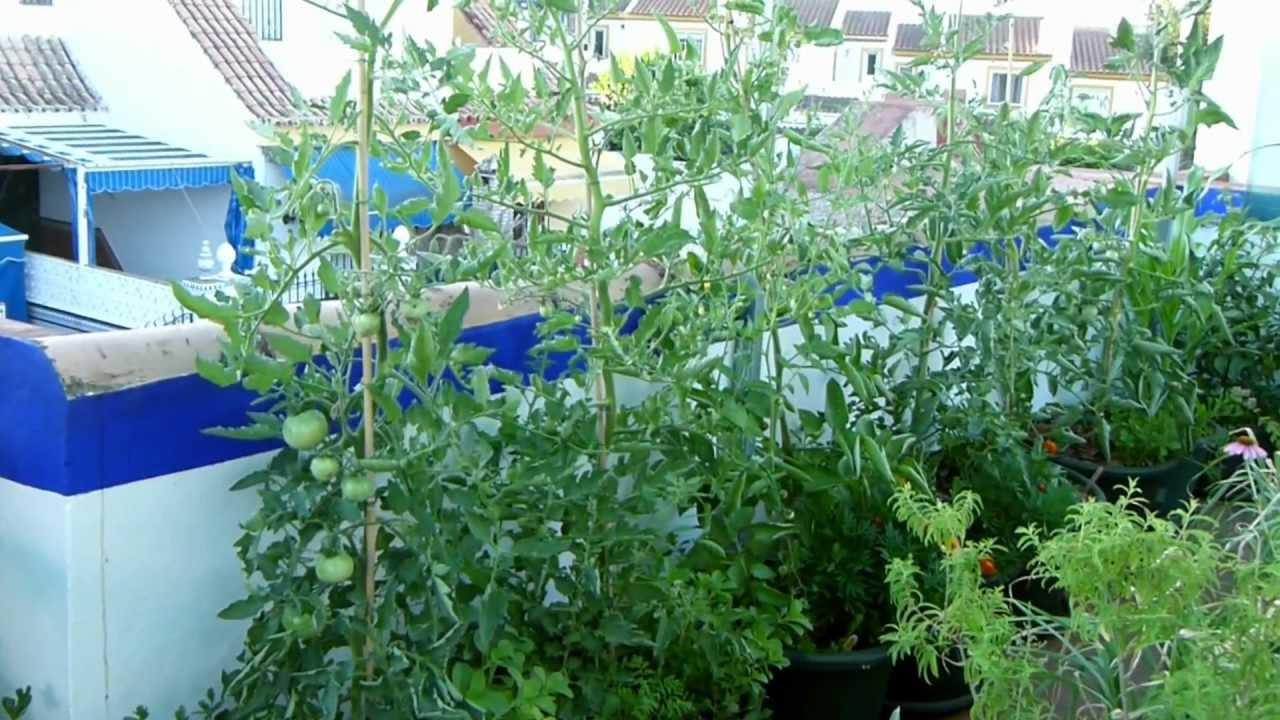 Amanecer en el macetohuerto de agro jardiner a ecol gica for Jardineria ecologica