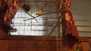 Fun with meh bird._.