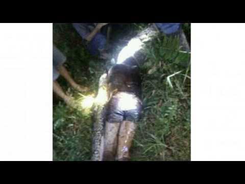 В Индонезии питон проглотил человека - Indonesia python swallowed a person
