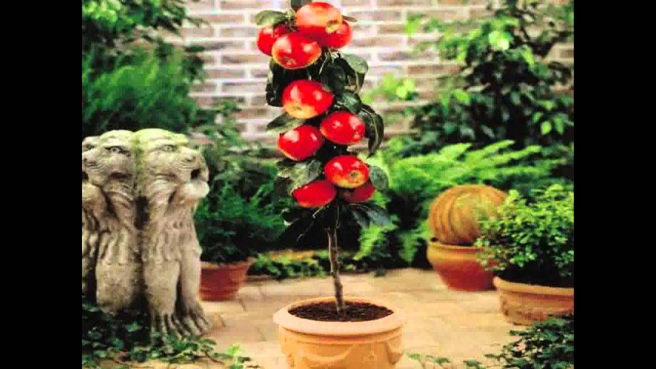 Small Home Garden Fruit Trees Ideas YouTube