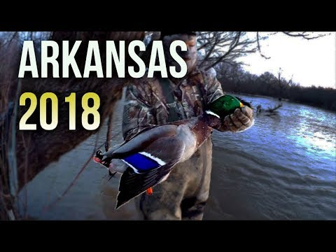 🦆Arkansas Public Water Duck Hunting (2018)