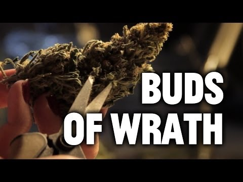 The Buds of Wrath: Hipsters Will Work For Weed