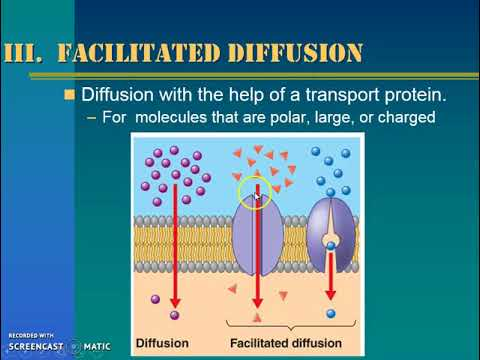 Osmosis and Diffusion Notes (Theme 2 Topic 3)
