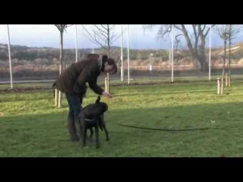 PetSafe® Training with an Electronic Remote Training System