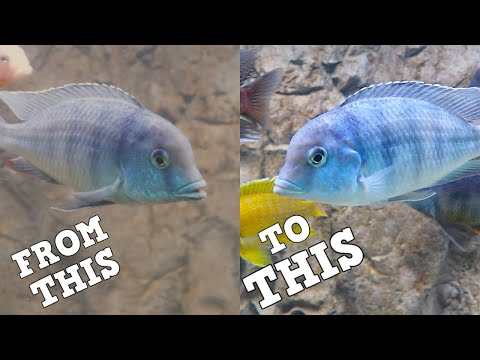 How I Got Clear Aquarium Water. Fixing Dirty Fish Tank Water.
