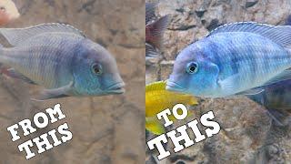 How I Got Clear Aquarium Water…