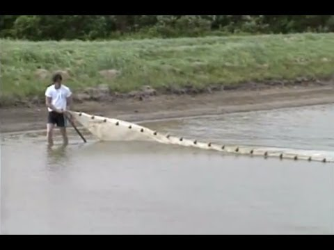 Farming Fish In Open Ponds