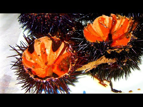 Вопрос: Каково значение и роль морских ежей в природе и жизни человека?
