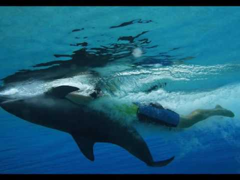 Aquaventure Waterpark & The Lost Chambers Aquarium Dubai (Lama Tours) – Lamadubai.com