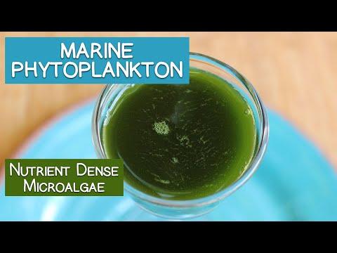 Marine Phytoplankton, A Nutrient Dense Microalgae