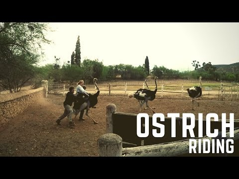 Ostrich Riding in South Africa (Travel EP# 14)