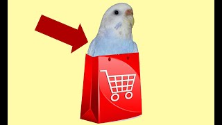 Обработка птицы после покупки. Мы купили еще птиц в вольер. Волнистые попугаи