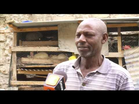 Smart Farm: Guinea Fowl Rearing