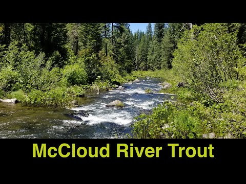 McCloud River Trout Fishing
