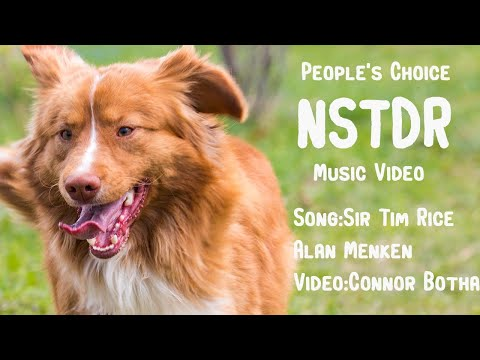 PEOPLE'S CHOICE: Nova Scotia Duck Tolling Retriever Official Song
