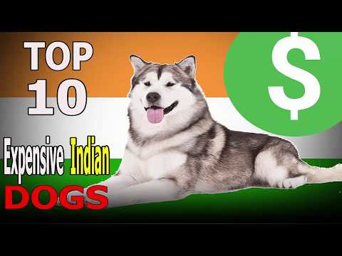 Top 10 Most Expensive Dog Breeds in India | Top 10 animals