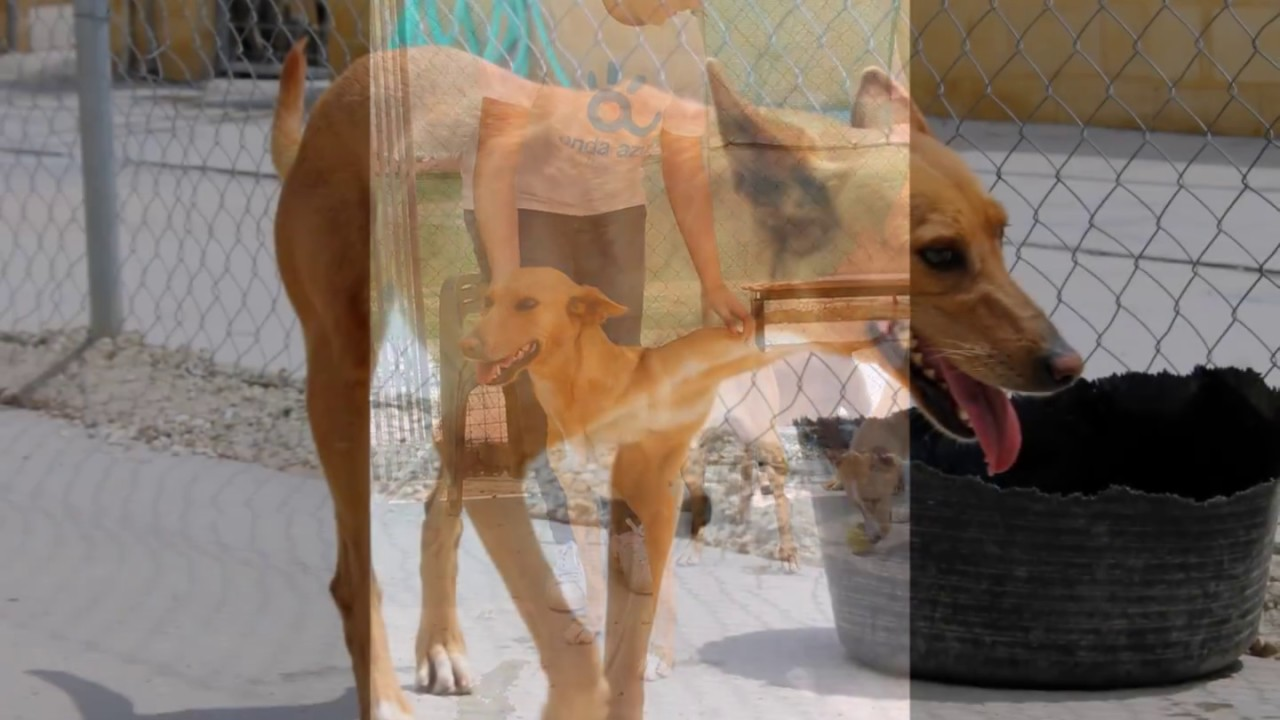 Protectora de animales de m laga lisa youtube for Protectora de animales malaga ciudad jardin