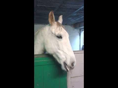 Cheval andalou qui fait les castagnettes... Funny talking horse