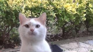 Животные приколы 2019 коты собаки до слёз greenli