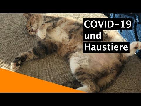 Coronavirus Vs. Hund & Katze? Entwarnung Vom Tierarzt