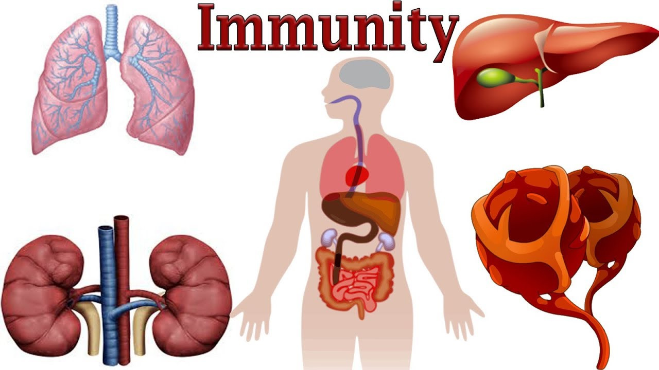 What is immunity 91