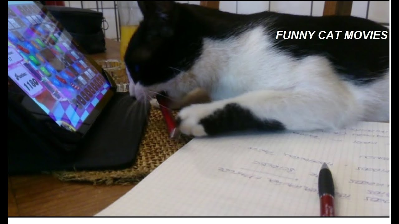 50 Cute Funny Cat Movies