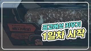 표고버섯 키우기 1일차♡ 표고버섯 키우는 표고키드를 샀…