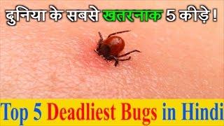 दुनिया के सबसे खतरनाक/ जहरीले 5 कीड़े | Top 5 Deadliest Bugs in Hindi