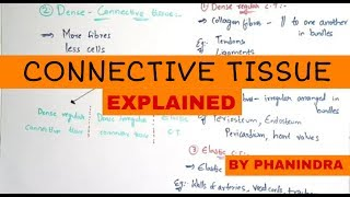 CONNECTIVE TISSUE || LOOSE CONNECTIVE TISSUE || DENSE CONNECTIVE TISSUE || BY PHANINDRA GUPTHA