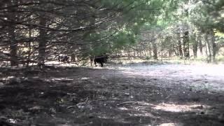 2015 Hagerman Hog Hunt Trailer