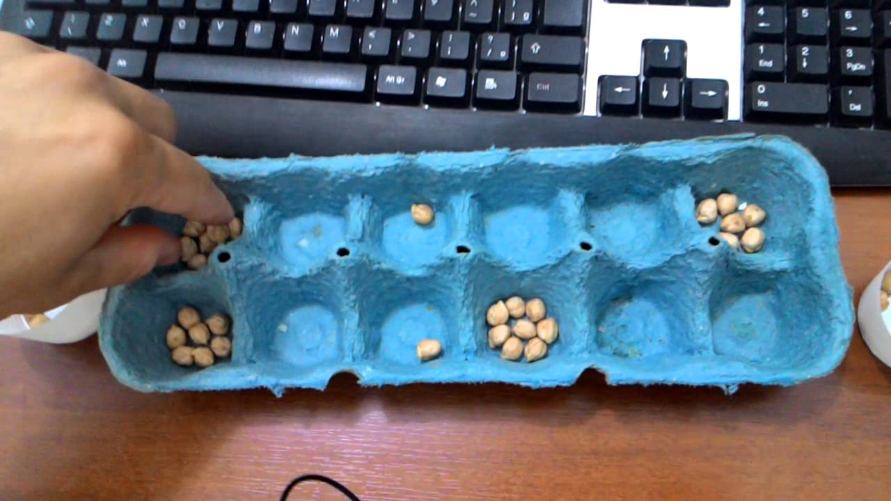 how to play mancala youtube