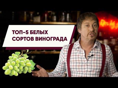 Топ 5 [БЕЛЫХ СОРТОВ] винограда