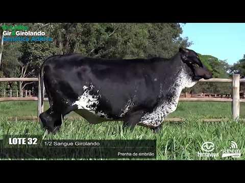 LOTE 32 - REM GAMBETA - 0314 - 0894-AU - 5º LEILÃO GIR E GIROLANDO GENÉTICA ADITIVA