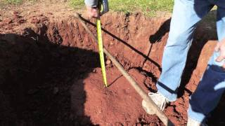 Tree Planting | Tree Experts Loudoun VA | Tree Doctors Springfield VA |  Tree Doctors Mclean VA