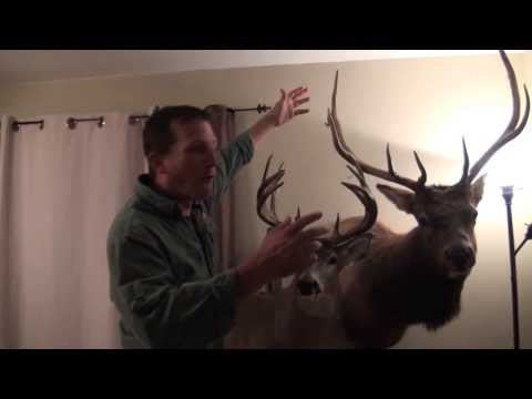 Hunting, Cooking And Eating A Bull Elk: Why We Hunt!
