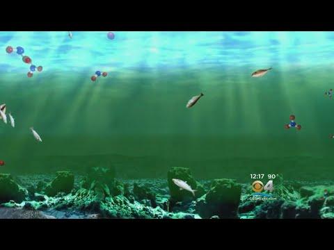 Biggest Ever Dead Zone In Gulf Of Mexico