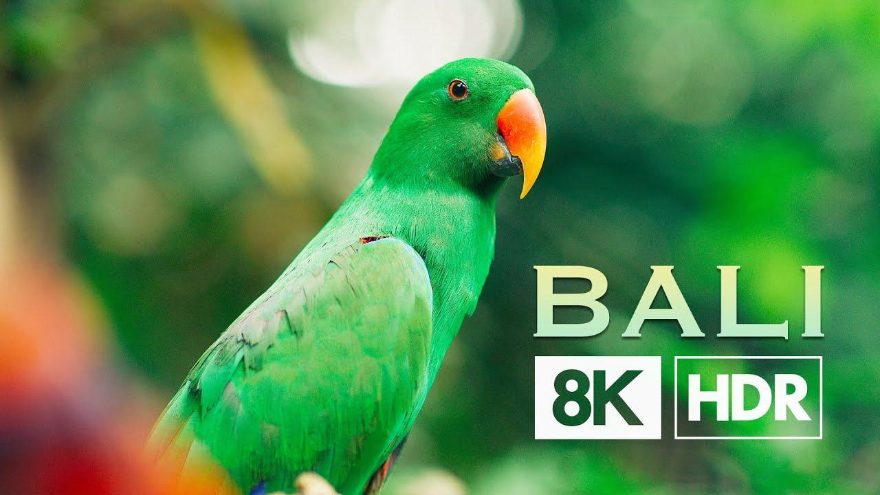 Bali 8K HDR