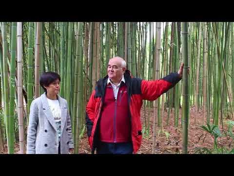 Вопрос: Почему пальма и бамбук это трава?
