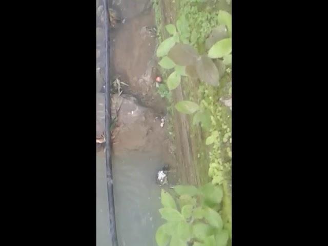 La contaminación del río Gaira no solo afecta a los peces