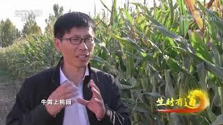《生财有道》 20201104 咱们家乡有特产——河北阜城:种下晚熟桃 收获致富果| CCTV财经 - YouTube