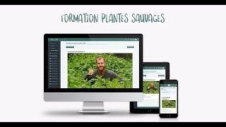 Découvrir les plantes sauvages avec Le Chemin de la Nature