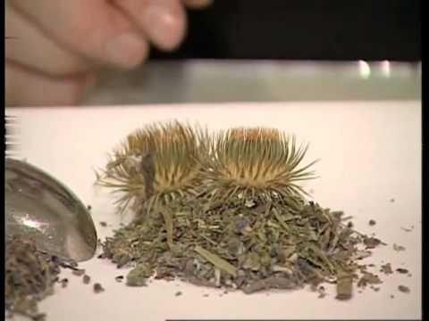 травы для похудения -